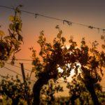 Photographe professionnel tourisme vin vignoble perpignan carcassonne